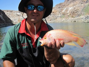 Bizarre bream caught in quarry dam - Uis, Namibia