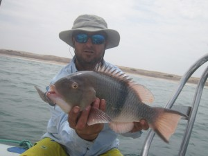 Blackbar hogfish - Flamingo, Angola